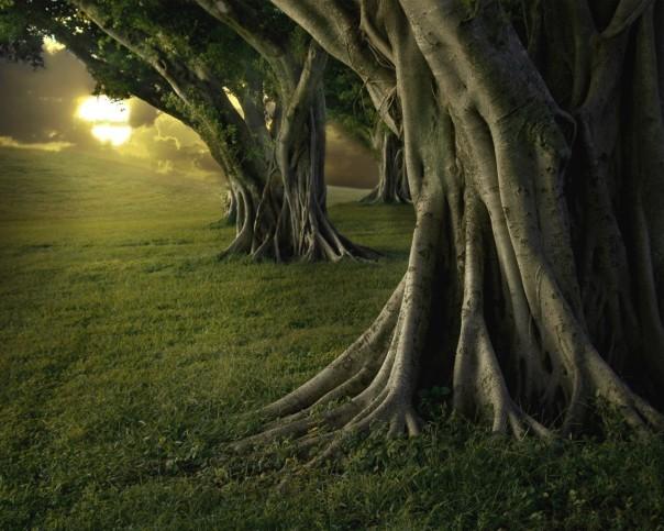 trees-landscapes-forests